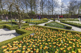 2 or 3-day Keukenhof Package_2