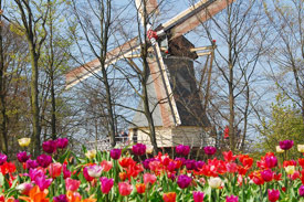 2 or 3-day Keukenhof Package_3